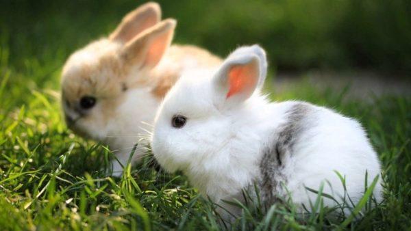 conejo sin sufrimiento animal